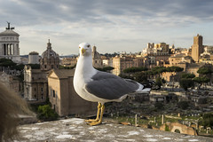 DSC07298 (Triin Olvet) Tags: fororomano itaalia palatino rome rooma