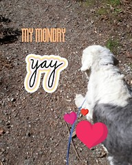 Beauty day for long walkies with Henry! (Doug Murray (borderfilms)) Tags: beauty day for long walkies with henry