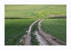 Sans titre (hélène chantemerle) Tags: champ chemin terre herbe vert field path dirt grass green