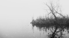 reflection (Darek Drapala) Tags: autumn reflection reflects warsaw warszawa water waterscape panasonic poland polska panasonicg5 park plants bw blackwhite blackandwhite nature skaryszewski