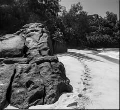 Anse Intendance / Пляж Анс Интенданс (dmilokt) Tags: природа nature пейзаж landscape море sea пляж beach пальма palm dmilokt чб bw черный белый black white nikon d850