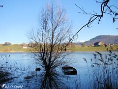 Lac de Bret 2 (Jean-Daniel David) Tags: nature lac lacdebret puidoux suisse suisseromande vaud ciel montagne eau reflet roseau arbre bateau paysage verdure champ moléson alpes