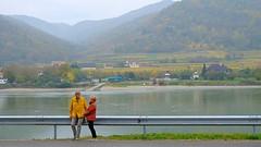 Autumn colours (halifaxlight) Tags: austria durnstein riverdanube landscape river hills couple roadguard autumn fall misty gold green church houses