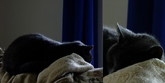 Sleepytime Time (Linda on the bridge to NewWhere) Tags: cat diptych flickrlounge weeklytheme lowkey