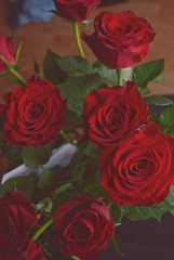 Red Roses (Alexis Kaylen) Tags: rose roses redrose red flower romance valentines day valentine sweet gift petals delicate plant
