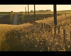 country life (Gordon Hunter) Tags: evening glow field crop light warm fence gully dip road highway prairies country rural alberta ab canada gordon hunter nikon d5000