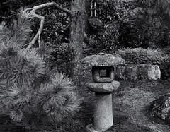 Stone lantern (Tim Ravenscroft) Tags: lantern stone japanese japan garden pine tree shorenin kyoto hasselblad hasselbladx1d monochrome blackandwhite blackwhite