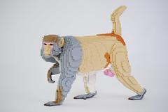 Rhesus Macaque (Felix Jaensch) Tags: lego sculpture animal nature lifesize monkey ape macaque rhesus felix jaensch primate