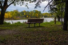 St Vital Park Bench (Bracus Triticum) Tags: st vital park bench winnipeg ウィニペグ マニトバ州 manitoba canada カナダ 9月 九月 長月 くがつ kugatsu nagatsuki longmonth 2018 平成30年 fall autumn september