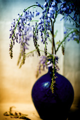 Wild Wisteria in Vase Still Life (Chickens in the Trees (vns2009)) Tags: sliderssunday hss wisteria flowers blue purple bottle vase stilllife affected vintageaesthetic vine southern arrangement blooming blossoms