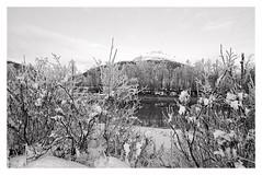 Røvassdalen (2018) (phamnes) Tags: nikonscanner snow landscape norway rana winter slr 35mm 135film blackandwhitefilm monochrome blackandwhite xtol apx100 agfaphoto sigma20mm sigma nikonf301 nikon