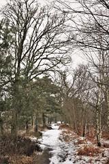 "Hampshire winter woodland (kerwitcherwoo) Tags: ""surrey hills"" snow winter ""thursley national nature reserve"" surrey aonb woodland trees paths uk england countryside"
