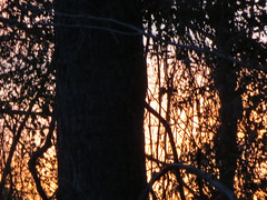 Tree At Sunset. (dccradio) Tags: lumberton nc northcarolina robesoncounty outdoor outdoors outside nature natural sunset evening eveningsky february winter goodevening saturday saturdaynight saturdayevening canon powershot elph 520hs tree trees treebranch treebranches branch branches treelimb treelimbs beauty scenic woods forest wooded settingsun eveningcolors daylightends eveningbegins
