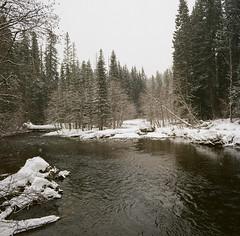fallen tree and river (sailronin) Tags: winter snow freezing trees forest river creek rocks film analog kodakfilm 120rollfilm ektar100 carlzeiss zeiss50mmdistagon rollei rolleiflex6008 nature woods