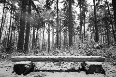 a cold place for your ass (Jos Mecklenfeld) Tags: winter snow schnee sneeuw forest wald bos nature natur natuur nulbos westerwolde sonya6000 sonyilce6000 selp1650 sonyepz1650mm niederlande nederland terapel groningen netherlands nl