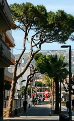 IMG_9501-1 (maria.urman) Tags: platja daro spain españa cataluña costa brava
