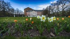 C'est le printemps ! (Fred&rique) Tags: sony allemagne trier trèves thermes printemps jardin fleurs nature ville urbain architecture couleurs