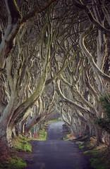 (John Baker - mainly D7100 & TZ100) Tags: zs100 tz100 antrim thekingsroad northernireland trees got gameofthrones darkhedges
