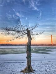 (LaTur) Tags: winter dc dcist city urban washingtondc we3dc welovedc ice snow monument washingtonmonument