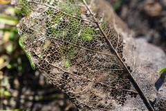 NEX_0274 (valerie something or other) Tags: carolina raleigh arboretum winter