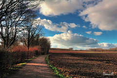Le plat pays (DOMVILL) Tags: france nord bosquet champs chemin ciel domvill nuages paysage wwwflickrcompeoplevildom