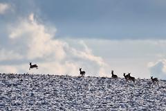La fuite (Excalibur67) Tags: nikon d750 sigma globalvision contemporary 100400f563dgoshsmc paysage landscape animaux gibier nature ciel sky cloud nuages faune