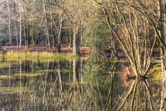 Reflecting Pool - Near The King's Oak Hotel - High Beach. (ArtGordon1) Tags: reflections reflection pond water eppingforest highbeach england uk essex countyofessex davegordon davidgordon daveartgordon davidagordon daveagordon artgordon1 february winter 2019