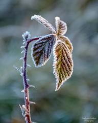 A Frozen Moment (barbara_donders) Tags: natuur nature winter frozen bevroren icey ijzig bokeh macro mooi prachtig beautiful magisch magical