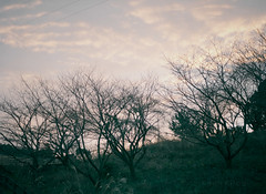 good morning (Kenji Kitae) Tags: nature tree wood forest mountain morning sunrise sky cloud lifestyle lifework location landscape japan earth