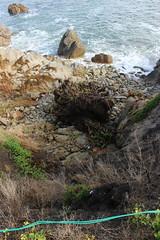 IMG_9776 (mudsharkalex) Tags: california pacificgrove pacificgroveca