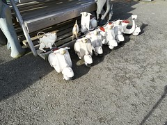 Scooters (daveandlyn1) Tags: scooters orniments thebritishironworkscentre nroswestry welshborders smartphone psdigitalcamera cameraphone pralx1 p8lite2017 huawei
