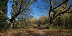 A Spring ride in February? (favmark1) Tags: cycle kent ncr18 chilham spring february