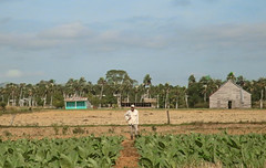 The Tobacco Farmer In His Field (peterkelly) Tags: digital canon 6d northamerica cuba cubalibre gadventures pinardelrio state tobacco farmer farm rural crop agriculture barn