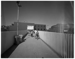 Camberhell iii (@fotodudenz) Tags: cameradactyl large format 4x5 film camera 47mm schneider super angulon xl ultra wide angle 2019 camberhell camberwell melbourne victoria australia ilford hp5 plus