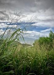 Near the Heiau (kimbar/Thanks for 4 million views!) Tags: hawaii oahu heiau park grasses ocean waimea