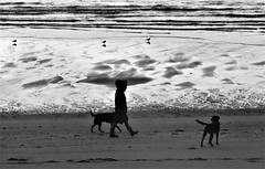1 Walker, 2 Black Labradors, 3 Black-Headed Gulls (Gilli8888) Tags: nikon p900 coolpix northumberland newbigginbythesea newbiggin northsea beach sand coast coastal shore seaside seascape sun dawn sea water marine blackandwhite silhouette silhouettephotography dogs people blackheadedgull gulls seagulls