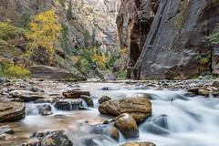 DSC_0880 (mattfroeming) Tags: zion zionnationalpark nationalparks utah thenarrows virginriver slotcanyon water