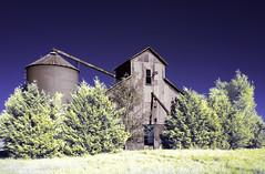 Sharpe, Kansas (explore) (unknown quantity) Tags: sky trees shadows rust grass abandoned grainelevator corrugatedmetal opendoorway weathered hss