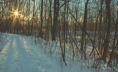 EOS_0119-1399 (DAN PHOTOGRAFIX) Tags: canon eos 6d reflex rehel stmichel paysage hiver winter sun soleil cold froid tree arbre ecorce bark snow neige glace ice ciel sky nuage cloud
