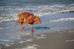 Dancing dog (sabine1955) Tags: beach dog ostsee balticsea