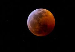 Blood Moon 2 (johndbillig) Tags: moon eclipse blood a7riii 100400gm stars california santapaula 2019