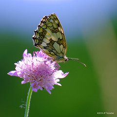 Souvenir d'été (jpto_55) Tags: papillon demideuil macro bokeh fuji fujifilm xe1 fujixf55200mmf3548rlmois hautegaronne france