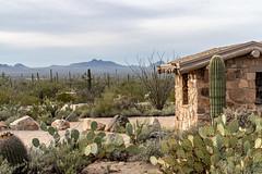 Tucson 116 (tyreedigital) Tags: tucson arizona southwest desert saguaro park outdoors mountains nature nationalpark cactus