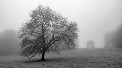 _IMG1842 Wentworth Park (Pete.L .Hawkins Photography) Tags: misty walk hoober wentworth near rotherham petehawkins petelhawkinsphotography petelhawkins petehawkinsphotography pentax hd pentaxd fa 2470mm f28 ed sdm wr