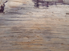 Driftwood (Jazpix) Tags: driftwood texture background wood natural decay pale