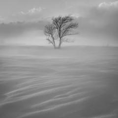 DSCF6832.jpg (mblonde12) Tags: britannia winter