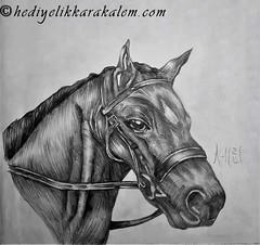 Black horse (hediyelikkarakalem) Tags: charcoal charcoaldrawing drawings draw image pictures illustration graphics paintings sketching pencildrawing art myart graphic creative portrait abstractart life love realism cool awesome beautiful sketchbook artist lifestyle europe usa design birthday