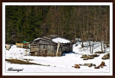 La cabaña del bosque (bruixazul poc a poc...) Tags: cabaña casa madera vias nieve pasopedreal montescárpatos rumania bucarestbrasov tren amoralarte frio