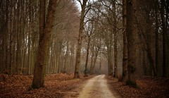 The Value of Silence (farmspeedracer) Tags: nature forest tree cold winter 2018 februar february germany