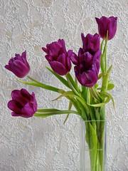 3786 Purple tulip bouquet (Andy - An idle laddy) Tags: anniversary bouquet flower gift petals programmode purple tulips vase